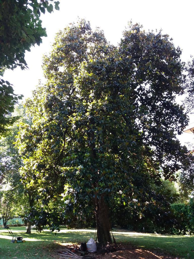 mastro-verde-giardini-parchi-aree-verdi-irrigazione-prato-modena-reggio-emilia-sistemi di ritenzione-004