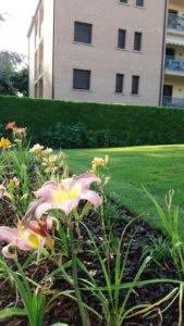 Calerno – Prato a rotoli per giardino pronto effetto