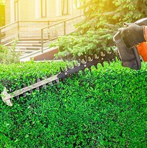 Mastro Verde - Giardinieri a Reggio Emilia e Modena - home-servizi-potatura-mastro-verde