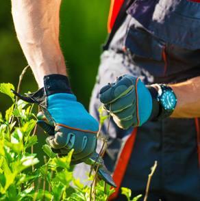 Mastro Verde - Giardinieri a Reggio Emilia e Modena - home-servizi-trattamenti-fitosanitari-3