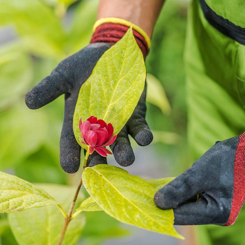 Mastro Verde - Giardinieri a Reggio Emilia e Modena - mastroverde-ci-prendiamo-cura
