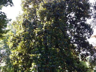 Mastro Verde - Giardinieri a Reggio Emilia e Modena - mastro-verde-giardini-parchi-aree-verdi-irrigazione-prato-modena-reggio-emilia-sistemi-di-ritenzione-004-custom_crop